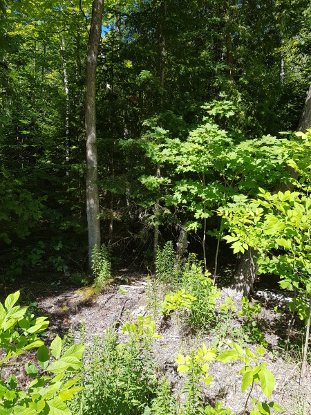 Building lot, 20 McKague Rd, $58,900  SOLD