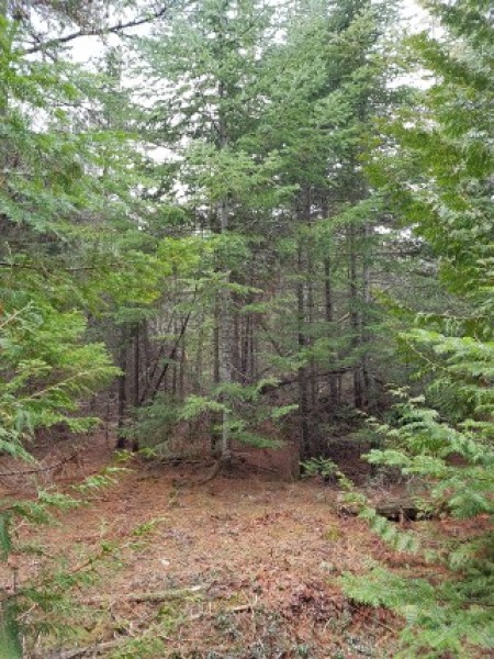 100 acres off Shaw Rd, N. Bruce Peninsula $119,000