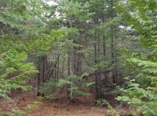 100 acres off Shaw Rd, N. Bruce Peninsula $119,000 SOLD