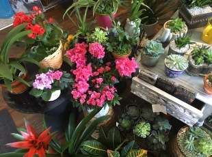 Cute plants and flowers