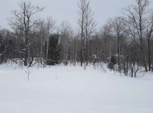 Just over 10 acres on Dyers Bay $69,000 -- SOLD